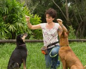 Puppy & Dog Obedience Training