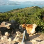 dog-hiking